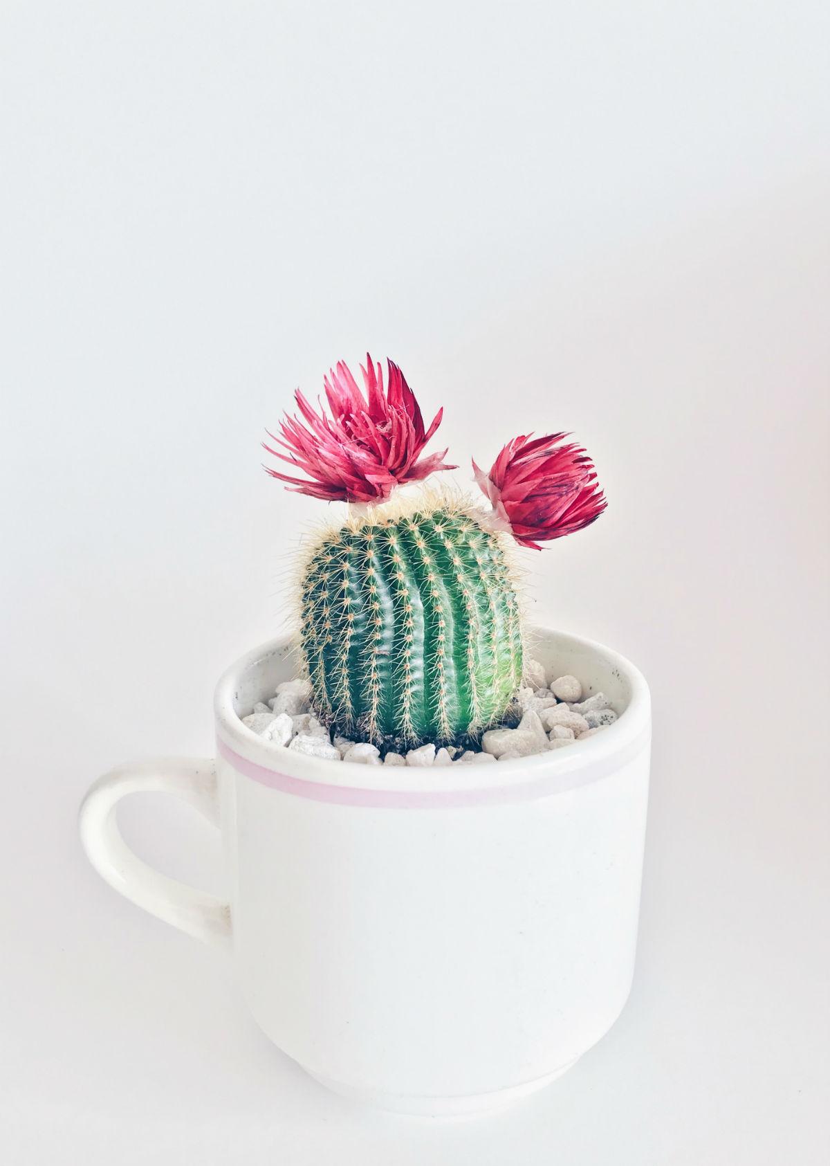 cadeau invite cactus